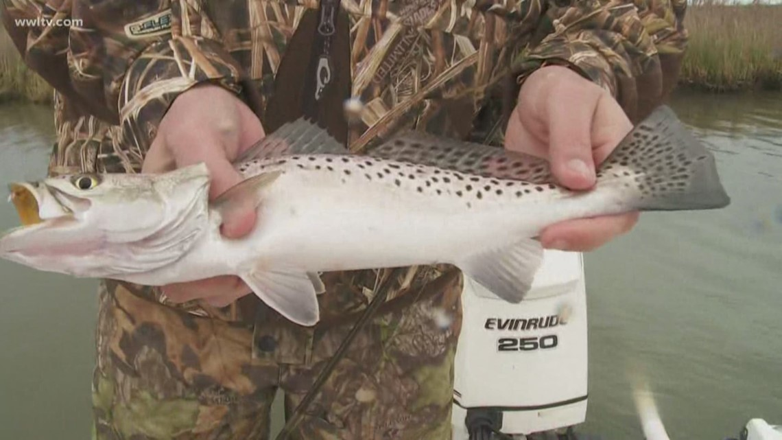 Fish and Game: Weather can't stop Don Dubuc from finding speckled trout