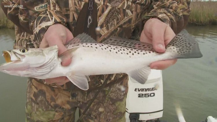 Fish and Game: Weather can't stop Don Dubuc at Delacroix Island