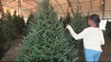National Christmas tree shortage means prices may be up