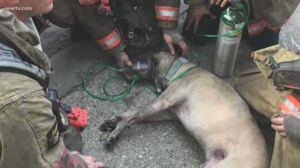First responders save 'Brees' the dog from Esplanade fire