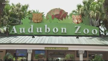 Audubon Nature Institute used public funds for parties, TVs, audit says