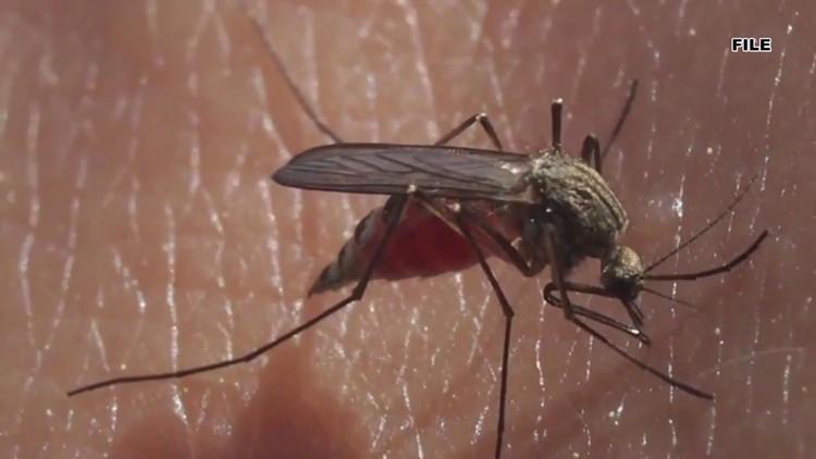 Hurricane Ida created a breeding ground for mosquitoes in Louisiana
