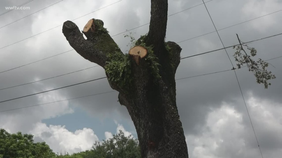 2 live oak trees illegally cut down in Lower 9th Ward