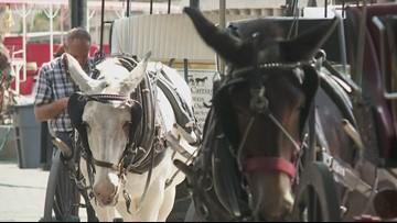 Mardi Gras Horse Inspections
