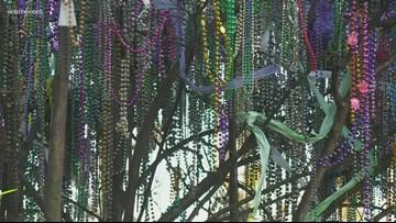 LSU creating biodegradable Mardi Gras beads