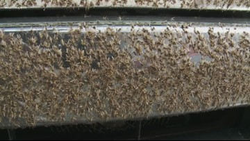 Bugs swarm Causeway bridge, cause lower visibility for drivers