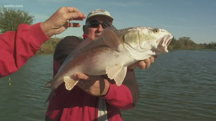 Fish & Game: Bass and Redfish
