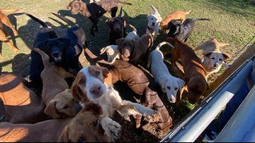 40 dogs rescued from Northshore breeder looking for forever homes