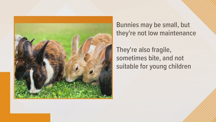 LASPCA offers information to consider before gifting a bunny for Easter