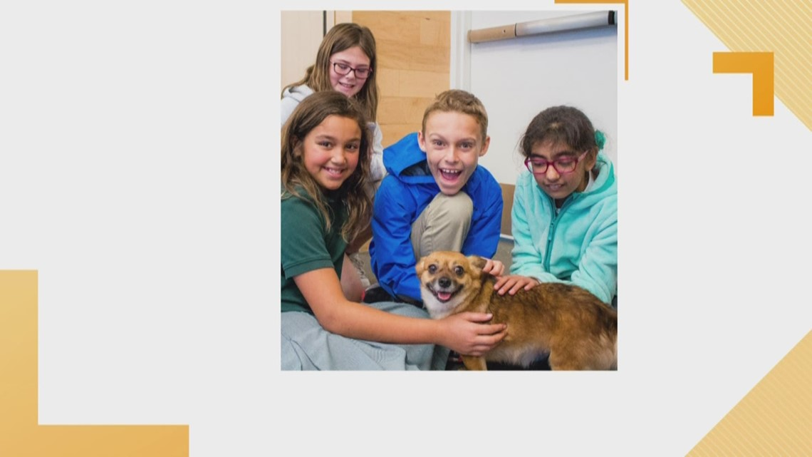 LASPCA Offers Summer Campus for all Ages
