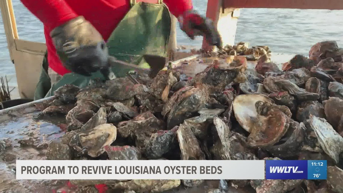 Hurricane Ida the latest blow to Louisiana's oyster industry
