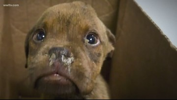 'Sick,' 'dying' puppies saved by stranger who saw them in ditch