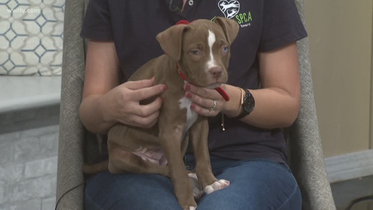 SPCA looking to clear their Shelter Saturday