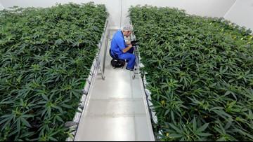 Company to sell stake in Louisiana medical marijuana program