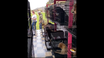 40 dogs rescued from overwhelmed Northshore breeder