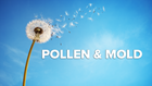 Pollen and Mold Count