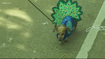 The Mystic Krewe of Mardi Paws had people wagging with excitement on New Orleans' Northshore