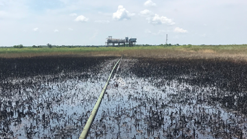 1000-gallon oil spill in Plaquemines Parish has been burned