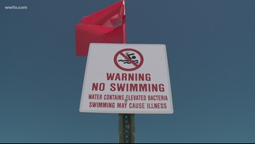 How harmful is the toxic blue-green algae that's closed Mississippi's coastline?