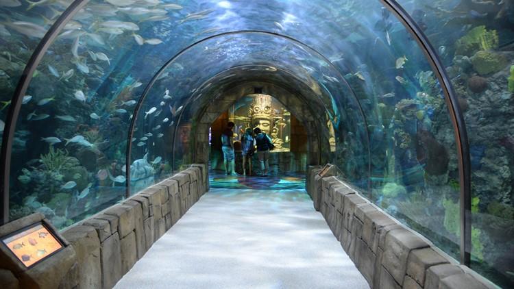 Audubon Aquarium adding more exhibits, merging with insectarium